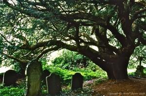 Yew Tree Churchyard